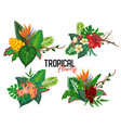 tropical collection with exotic flowers vector image vector image