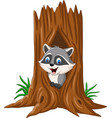 cartoon raccoon sitting in hollow a tree vector image vector image