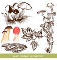 collection of mushrooms for design vector image
