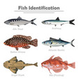fish icon set realistic vector image