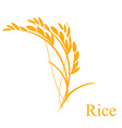 Rice ears vector image vector image
