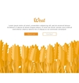 Wheat Ears Web Template in Flat Design vector image