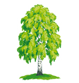 Birch with lush green crown vector image vector image