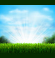 fresh green glade with grass season background vector image