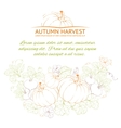 Pumpkins Autumn harvest vector image vector image