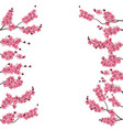 branches with a pink cherry buds sakura from vector image vector image