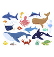 collection sea animals flat vector image
