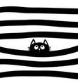 black cat kitten face head looking up vector image