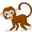 cute bamonkey on white background vector image