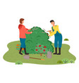 gardeners cut a large bush little rose bush vector image