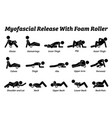 myofascial release with foam roller physical vector image vector image