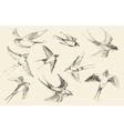 Swallows Flying Bird Hand Drawn Sketch vector image vector image