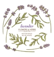 lavender set vector image