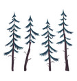 set pines spruces or firs coniferous vector image