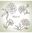 Floral set vector image vector image