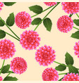 pink dahlia on beige ivory background vector image