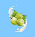 ripe berry green gooseberry in milk splash vector image vector image