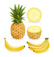 pineapple and banana fruit vector image vector image