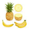 pineapple and banana fruit vector image