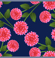 pink dahlia on navy blue background vector image vector image