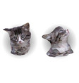 two portraits gray and white kitten poly art vector image