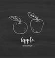 apple drawing hand drawn apples sketch of vector image vector image