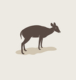image of an barking deer vector image vector image