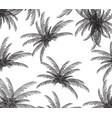palm silhouette on white background vector image