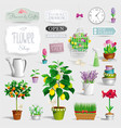 set of the pot plants and garden tools vector image