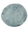 abstract dark grey brush stroke circle shape vector image