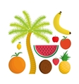 Isolated Fruits and summer concept vector image vector image