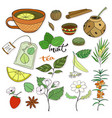 tea collection herbal plants and elements for vector image