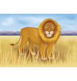 wild african lion in savanna between mountains vector image vector image