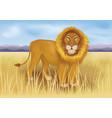 wild african lion in savanna between mountains vector image