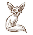 african wild animal fennec fox isolated sketch vector image