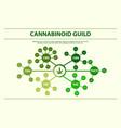 cannabinoid guide horizontal infographic vector image vector image