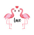 Cute flamingo love background