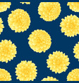 yellow dahlia on navy blue background vector image vector image
