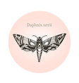 oleander hawk moth tattoo art daphnis nerii vector image