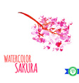 Abstract Watercolor Sakura Branch vector image