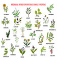 best herbs for irritable bowel syndrome ibs vector image vector image