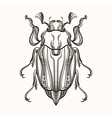Hand drawn engraving Sketch of Beetle May bug for vector image vector image