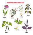 best herbal remedies for hay fever vector image vector image
