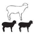 hand drawn sheep set vector image vector image
