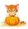 Harvest Kitten vector image vector image