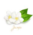 jasmine flower and leaf vector image vector image