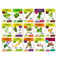 spice and herbs vegetables price tags set vector image vector image