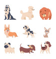 cartoon dogs retriever labrador husky puppies vector image vector image