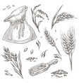 spikelets wheat or barley crops in bag vector image vector image