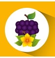 cute flower and grape fruit design vector image